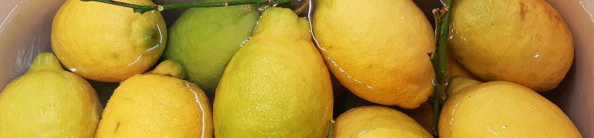 Citrons jaunes de Sorrente